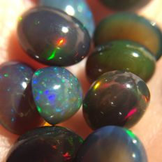 Lot of Opal - Oval cabochon - 11.66 ct (13)