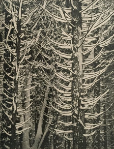 Ansel Adams (1902-1984) - Winter forest detail