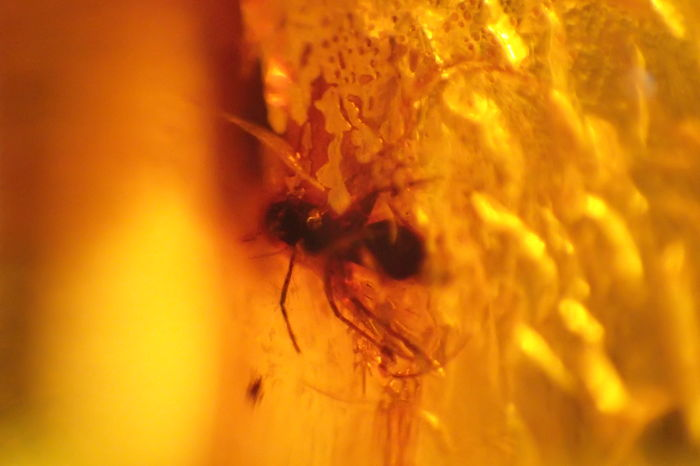 Baltic amber with insects and inclusions - 13–20 mm (6)