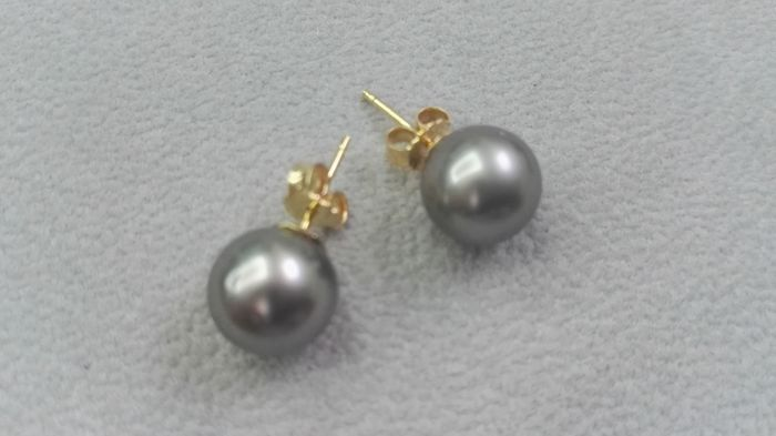 Earrings - Tahitian pearls of 9-10 mm - 18 kt gold No reserve price