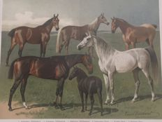 After Emil Volkers (1831 - 1905) - Horse breeds from Meyers Kano Lexikon 5e auflage (1893 - 1897/1901)