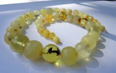 Natural Baltic Amber necklace, weight 52 gram.
