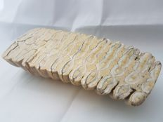 Mammoth tooth fossil - 160 x 60 mm - 470 g