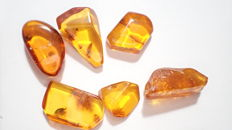 Baltic amber with insects - 10–20 mm (6)