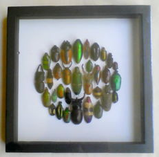 Interesting arrangement of Jewel Beetles, Stag Beetles and others - 22 x 22cm