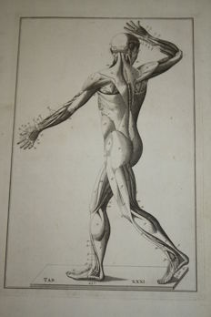 3 anatomical print - De anatomie van een man - 18th century