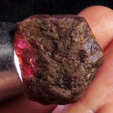 Natural purple red twoo-colour corundum rough lot - 207,8ct (4)