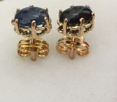 Earrings in 18 kt/750 yellow gold with deep blue sapphires weighing 1.60 ct – Earring length: 15 mm - no reserve price