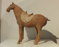 A Painted Red Pottery Saddle Horse, Tang Dynasty, TL-test. 32 cm x 35cm.