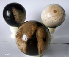 Lot of 3 large balls of petrified wood - 90 mm, 2.4 kilos