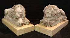 A pair of marble dust powder lions with an Nembro yellow marble base - Italy, Venice - early 20th century