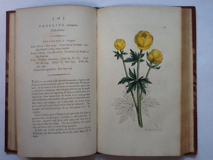 James Sowerby - English botany - 1790