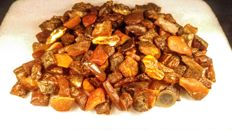 Huge Lot of  Raw Baltic Amber - 600 gm