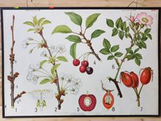 Beautiful botanical school poster