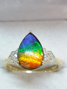 Very Rare Genuine Canadian AA Grade 8x12mm Ammolite yellow gold Dress Ring. Natural canvas of colours. Such a talking point