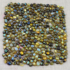 Best Flash Genuine Calibrated Labradorite Gemstones lot - 1030 ct (373)