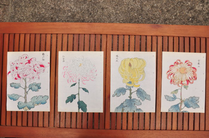 Four chrysanthemum prints by Keika Hasegawa from the series 'One Hundred Chrysanthemums' (reprint) – Japan – Mid 20th century