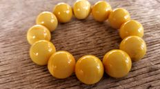 Baltic amber bracelet Egg yolk colour