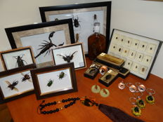 Interesting and varied Lot comprising Entomology collection - specimens in lucite, framed specimens and bottled specimens - 3.5 to 18cm (40)