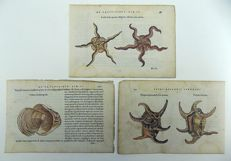3 leaves with 3 woodbocks by Belon of Crustaceans Starfish; Shells; Stella Solis, Purpura, Ostrea - 1554