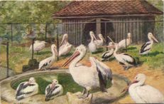 Birds more than 100 x-various types of birds (pigeon, chicken, swallow) including embossed cards-period: 1900/1950