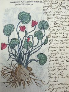 2 botanical prints by Leonhard Fuchs - Cyclamen. Flatsedge - 1549