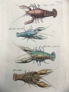 Matthias Merian - hand colored copper engraving - Crustaceans: Lobster, Crabs, Crawfish - 1657