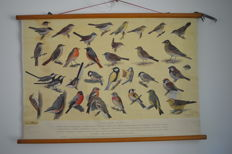 School poster: Birds at our house no. 2, H. J. Slijper