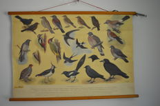 School poster: Birds at our house no. 1, H.J. Slijper