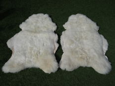 Large, thick and supple Sheepskins - Ovis aries - 145 x 80cm  (2)