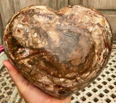 Petrified Wood, with striking colour combination - large heart-sculpture - 22 x 19 x 11.5 cm - 7.54 kg