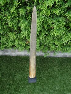 Large Swordfish rostrum on pedestal- Xiphias gladius - 91cm