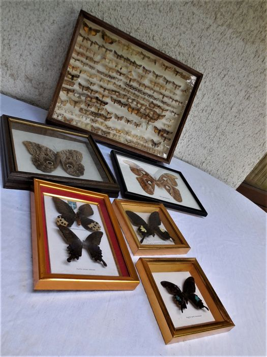 Vintage European moth collection, approx. 150 specimens, with all data; together with 5 recent exotic butterfly frames - largest 44 x 33 cm (6) - ...