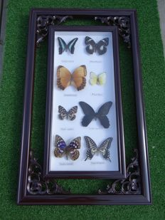 Oriental-style Butterfly hanging frame - 58.5 x 35cm