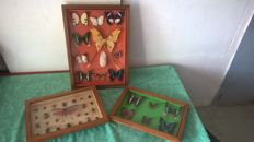 Vintage Butterfly and Beetle collection - Lepidoptera and Coleoptera sp. - 33 x 23, 33.5 x 23.5 and 30 x 43cm  (3)