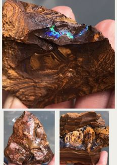 Boulder Opal collection - 5 to 11 cm - 880 g - 6935 ct (3)