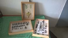 Vintage Entomology collection including Stick and Leaf Insects, with others - 51 x 42cm and 56 x 47cm  (3)