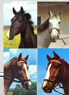 "Mixed collection ""horse cards""."