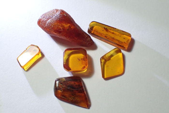 Baltic amber with insects - 12-29 mm (6)
