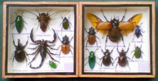 Fine, attractively presented Insect displays - 15 x 15cm  (2)