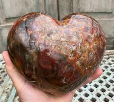Petrified wood heart with striking colour combination - large egg-sculpture - 18.5 x 16 x 10 cm - 3.95 kg