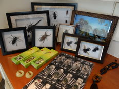 Interesting and varied Lot comprising Entomology collection - specimens in lucite, framed specimens - 3.5 to 18cm  (26)