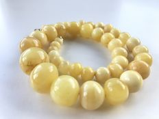 Genuine natural polished Baltic Amber necklace in butter colour, 31 gr.
