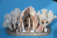 Very nice old / antique sculpture of coral & shells