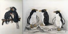 B. Sluyterman (1900 -1999)  - Toekans en pinguins - lot of 2 lithographs