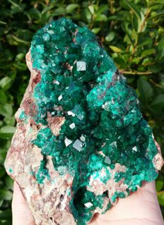 Huge Green Dioptase on matrix - Top Quality with large crystals - 14 x 10 x 8.5 cm - 1270 gm