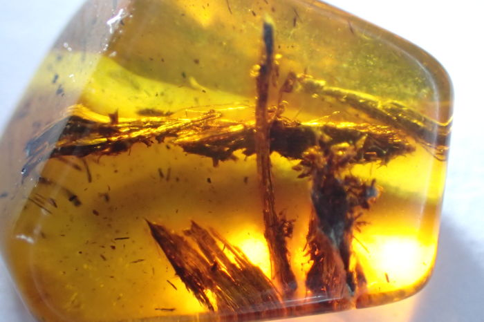Baltic amber - big fly, tree, inclusions, insects, 14–20 mm (5)