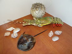 Taxidermy - Marine Lot comprising Vietnamese Lobster, Balloon Fish and Horseshoe Crab - various species and sizes - to 45cm  (3)