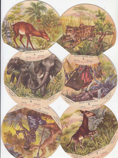 Beautiful lot of 147 collectable cards Belgian Congo Belge published by La vache qui rit cheese