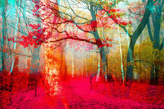 Thomas Bijen - Pink Forest